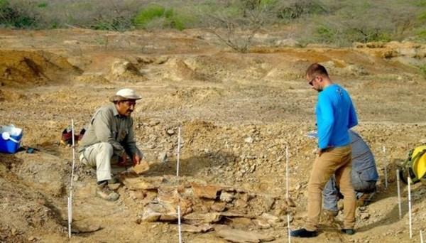 Otomobil boyutunda kaplumbağa fosilleri keşfedildi