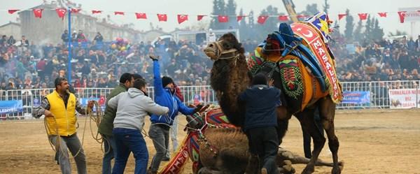 Aydın'ın deve güreşlerini anlatan belgesel Londra'da finalist oldu