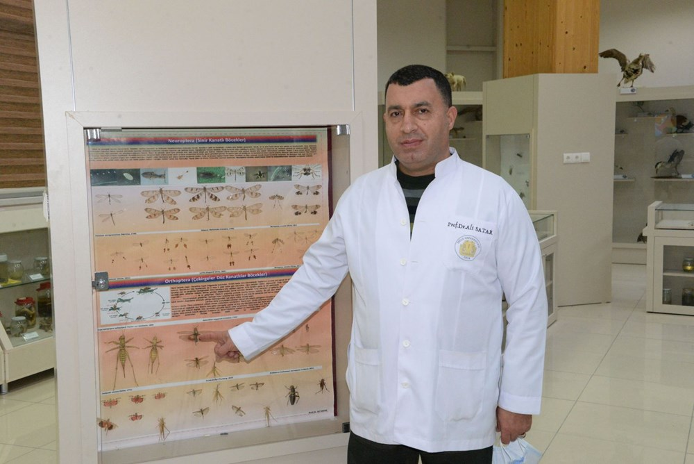 Prof. Dr. Satar: Önlem alınmazsa yumurtadaki çekirgeler 2021'de istilaya neden olur - 5