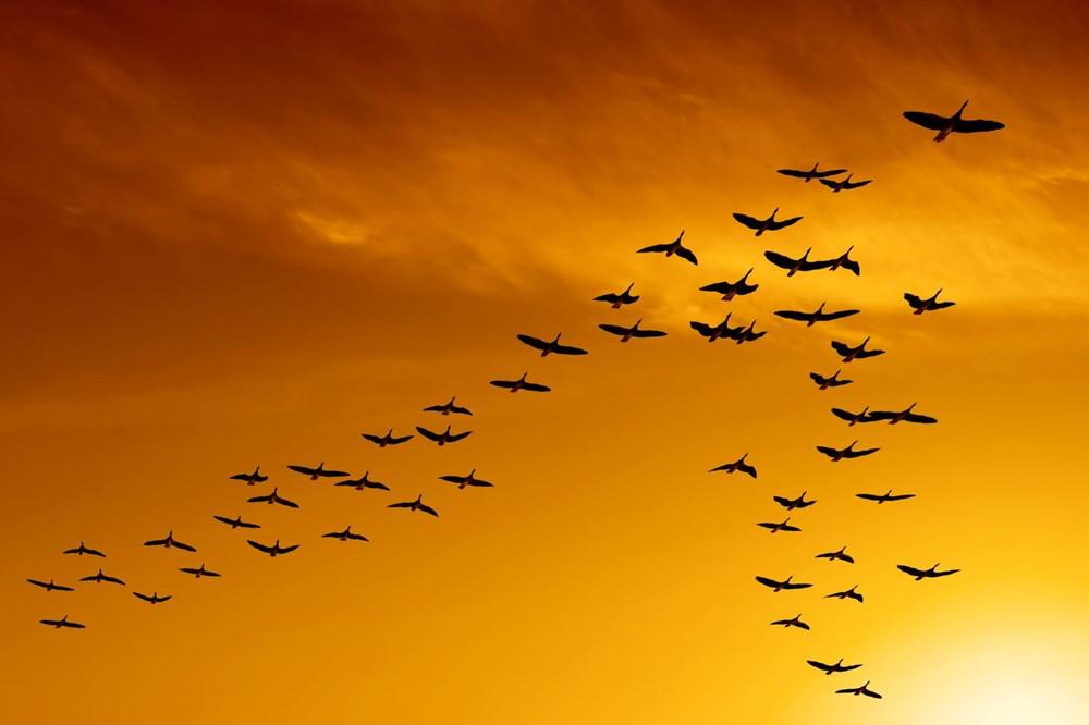 Dünyada kaç kuş yaşıyor? (İlginç bilgiler) - 2