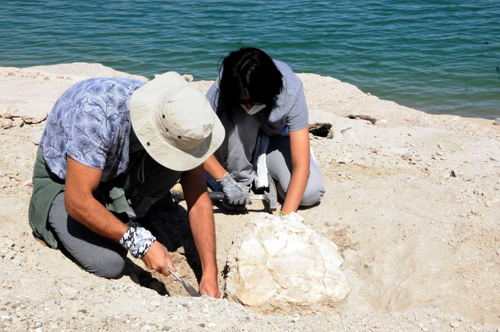 Kayseri'deki ilk kez 7,5 milyon yıllık kaplumbağa fosili bulundu - 4