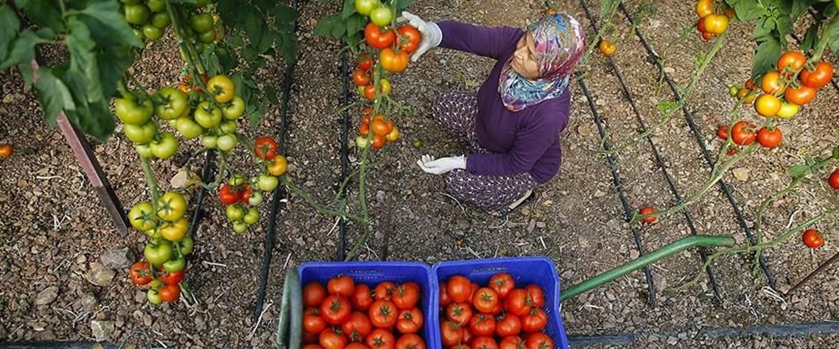 Yaş meyve ve sebze ihracatında 2 milyar dolar barajı 9 ayda aşıldı