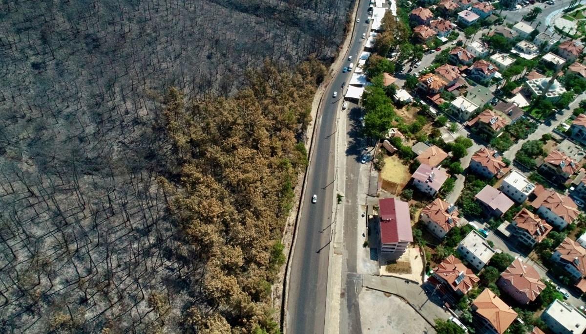 Marmaris ve Datça'daki orman yangınlarının ardından doğa yeniden canlanmaya başladı