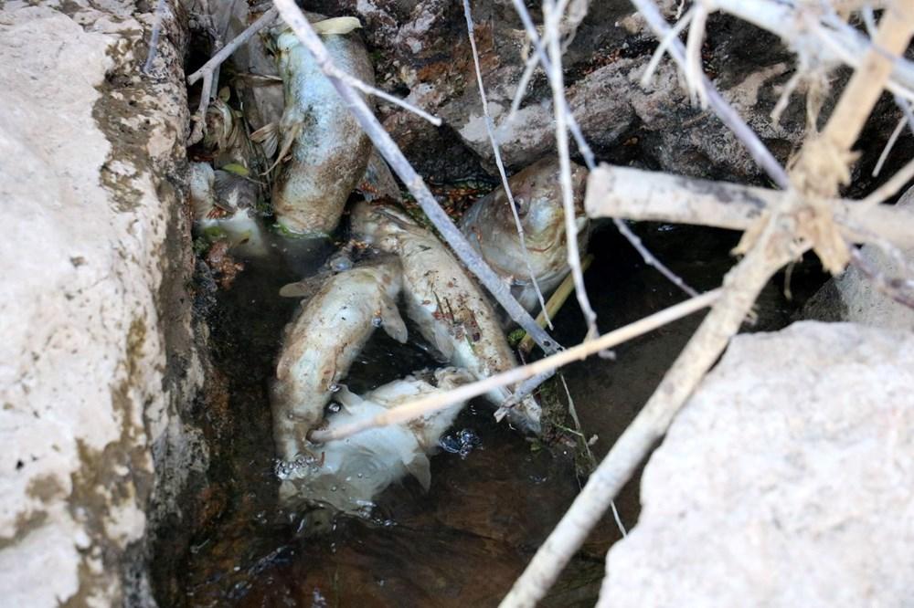 Türkiye'nin en uzun nehri Kızılırmak'ta toplu balık ölümleri - 7