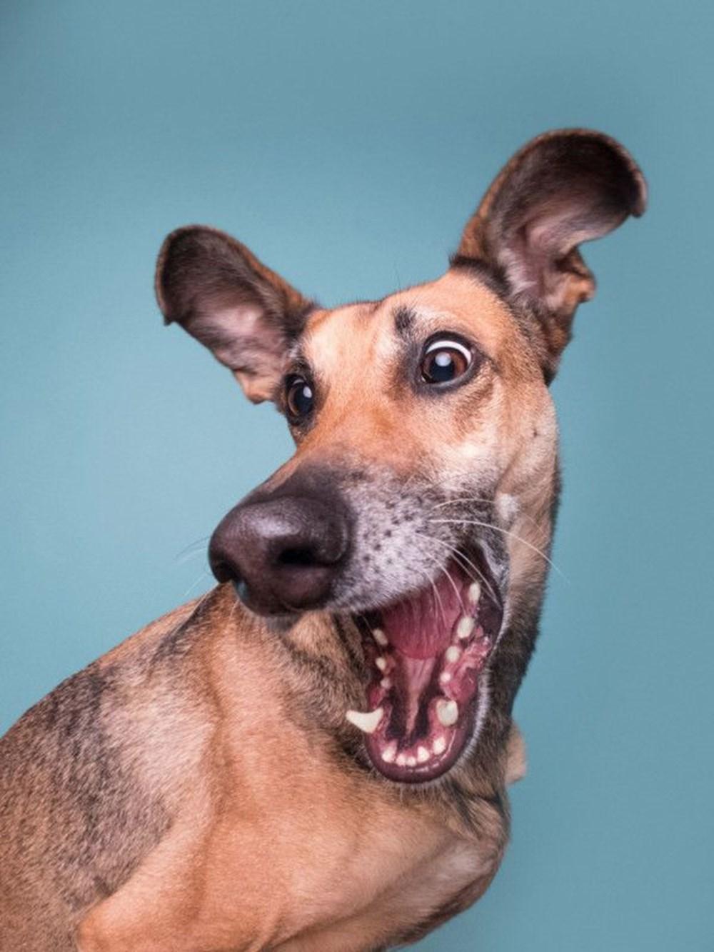 2020 Mars Petcare Komik Hayvan Fotoğrafları Yarışması'nın finalistleri - 6