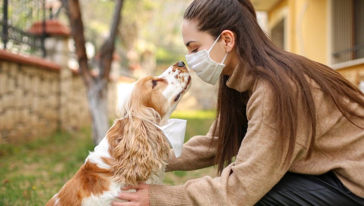 Bilim Kurulu Üyesi Prof. Dr. Midilli: Hastalığı evinde geçirenler, evcil hayvanlarından da uzak durmalı