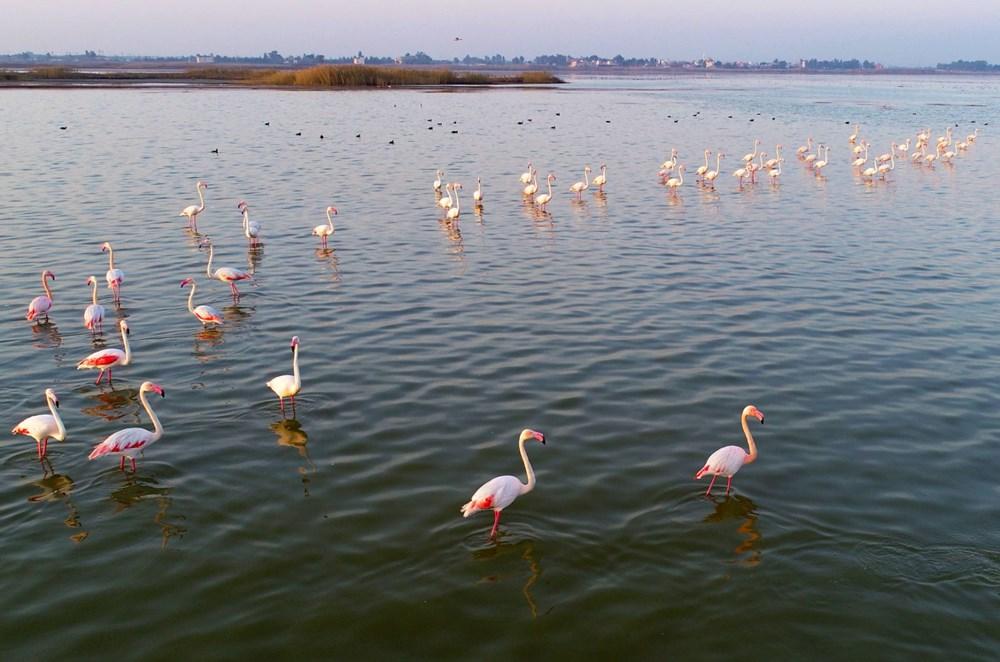 Adana'da doğa harikası Akyatan Lagünü hem flamingoları hem de  fotoğrafseverleri ağırlıyor | NTV
