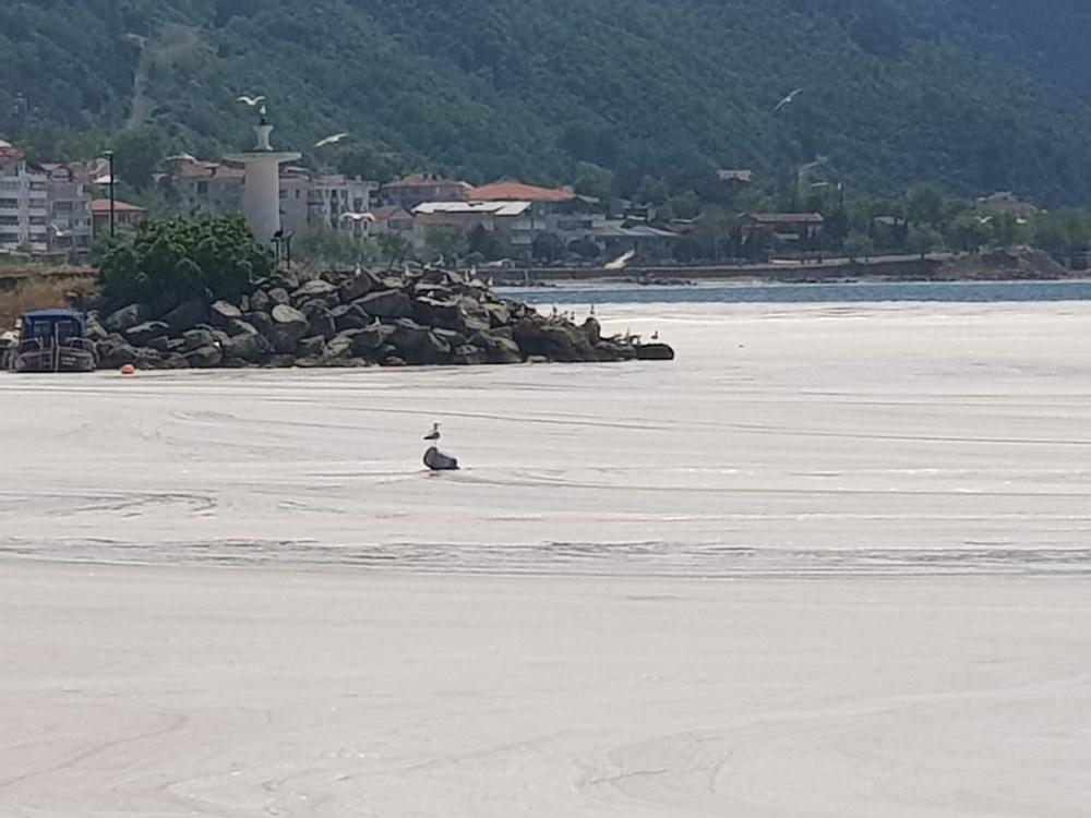 Çınarcık sahili deniz salyasıyla kaplandı - 6