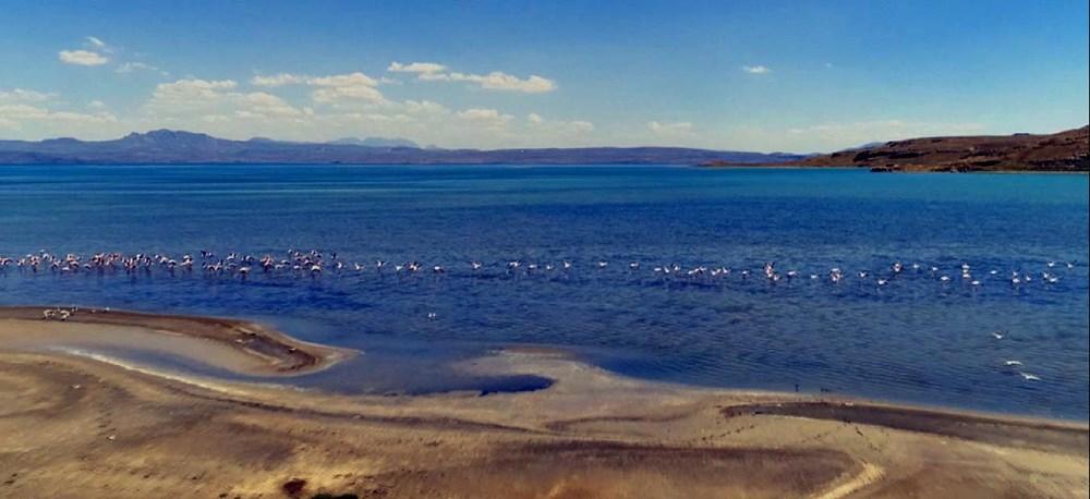 Van Gölü'nde flamingo şöleni - 14