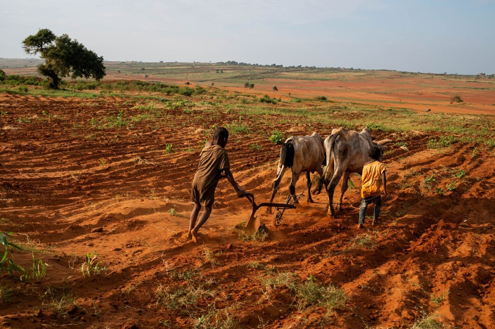Tarihte sadece iklim krizinden kaynaklanan ilk kıtlık Madagaskar'ı kırıp geçiriyor - 1