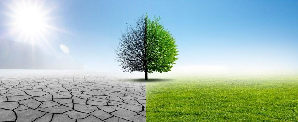 Kuraklık tehlikesi kapıda: Ağaç sayısını yüzde 20 artırmak, yağışlarda yüksek bir artış sağlayabilir - 5