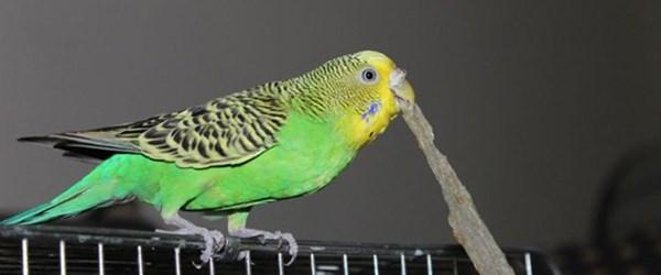Kaçan kuşunu yakalamak isterken öldü