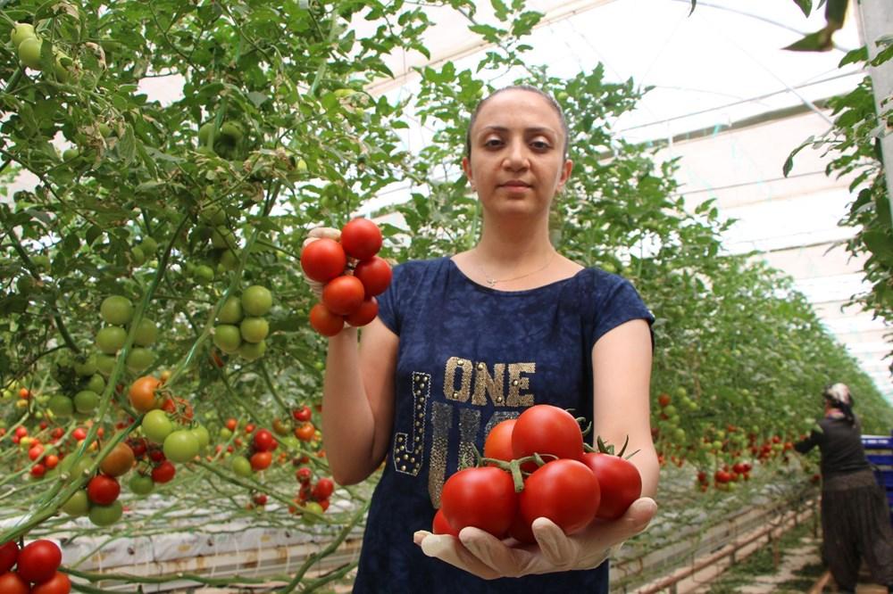 Elazığ'da topraksız tarım, kadınlara iş kapısı oldu - 6