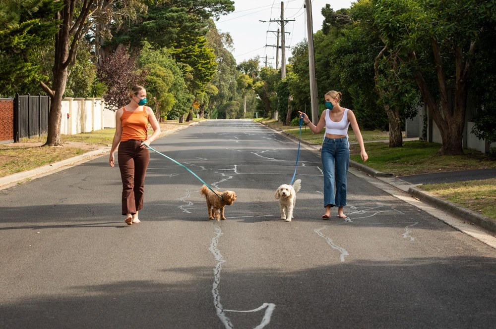 Pandemide sahiplenilen her beş köpekten biri terk edilme riskiyle karşı karşıya - 5