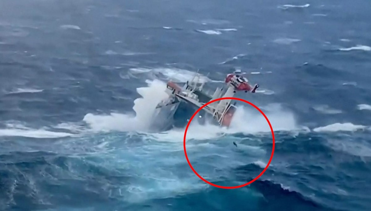 They were rescued from the waves in the ocean