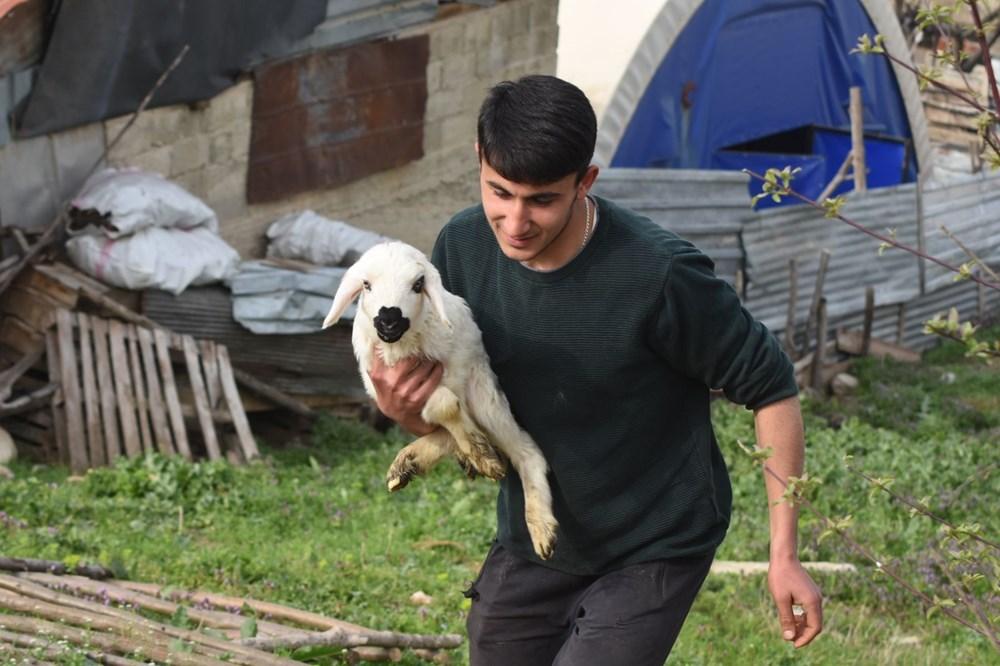 Çoban köpeği kuzunun süt annesi oldu - 10