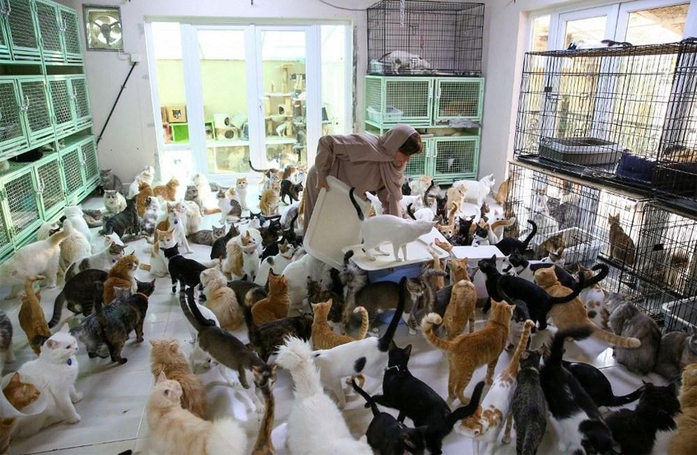Evinde 480 kedi ve 12 köpeğe bakıyor - 5