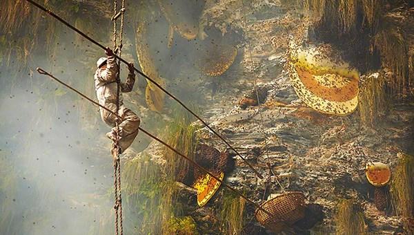 8000 yıllık gelenek: Nepal'in ölüme meydan okuyan bal avcıları