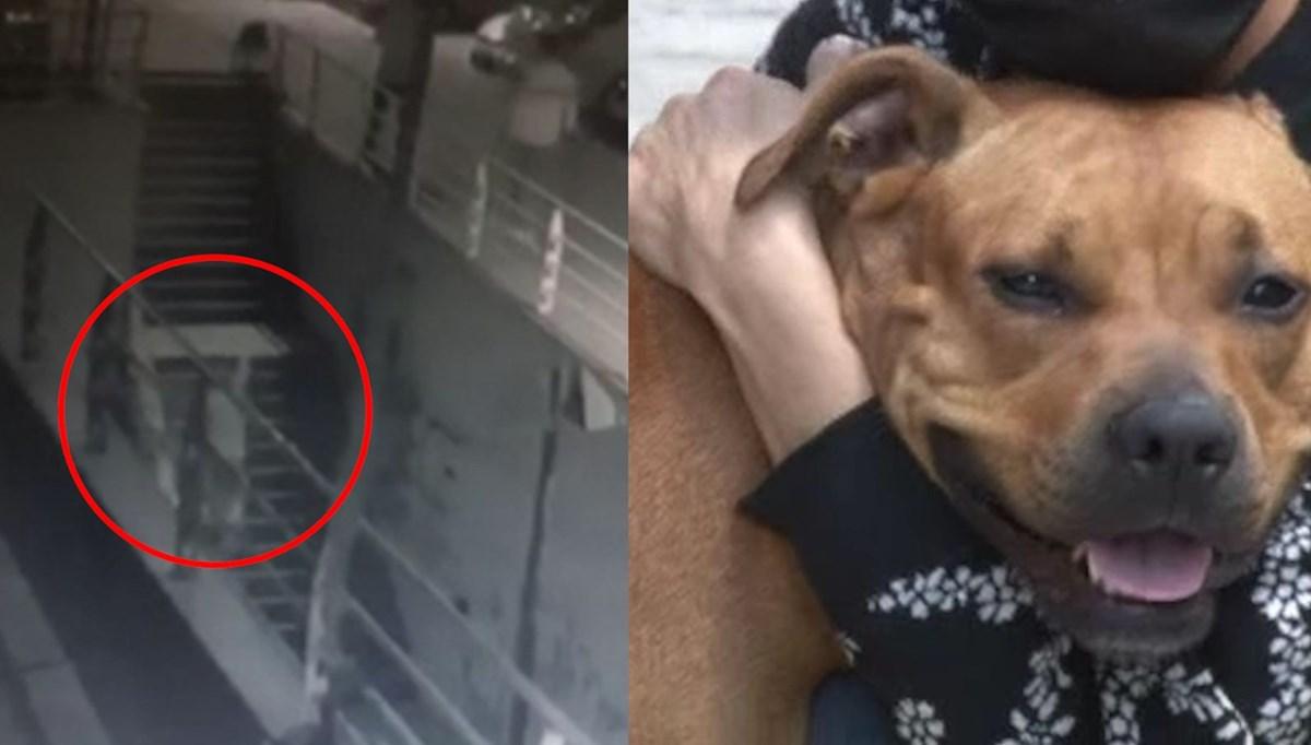 Köpeğe pompalı tüfekle ateş etti