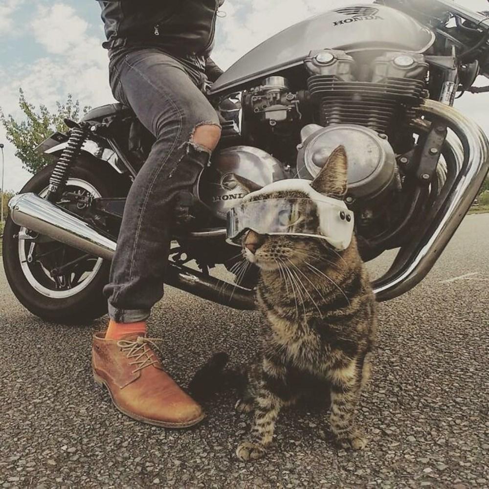 Adrenalin tutkunu kedi! Sahibiyle birlikte maceradan maceraya koşuyor - 1