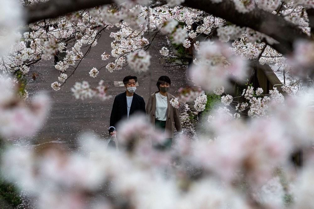 Sakura çiçekleri son bin 200 yıldır bu kadar erken açmadı: İklim değişikliği nedeniyle ekosistemler çökme noktasında - 10