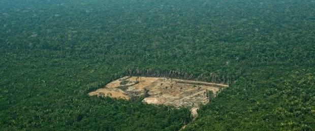 amazon orman