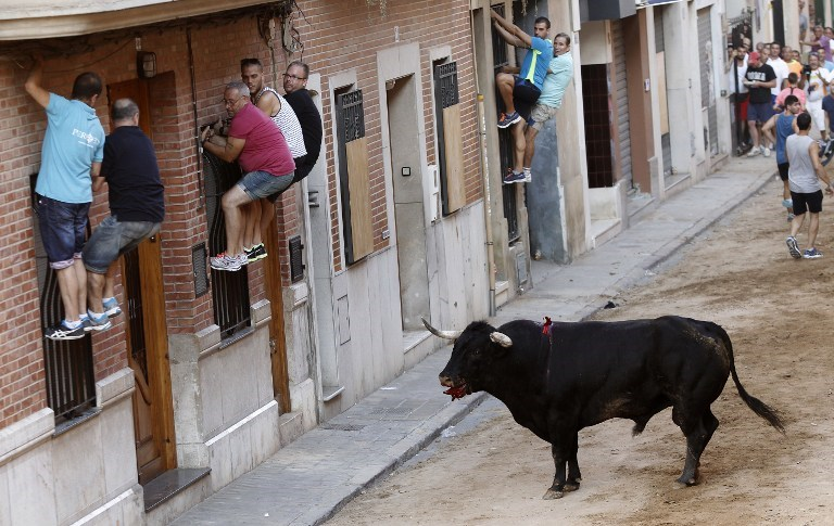 İspanya'da boğa festivali