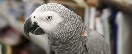 papağan.png