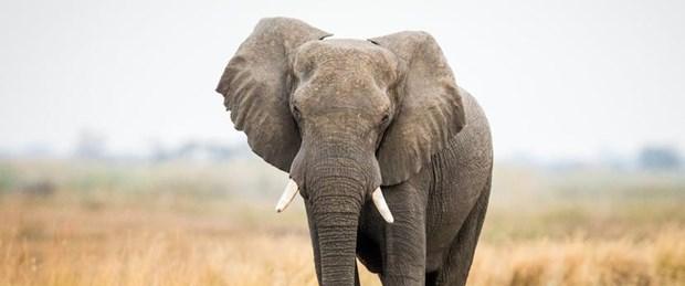 fil saldırısı.jpg