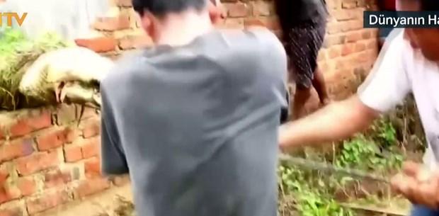 Endonezya'da timsah katliamı (Halk timsah çiftliğini bastı)