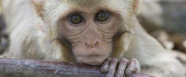 maymun arşiv.jpg