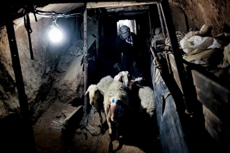 Koyun–kuzu, çoğu Gazzelinin sadece bayramlarda satın alabildiği bir lüks. Pek çok çiftlik savaştan mahvolmuş, diğer arazilerse İsrail'in girişi kısıtladığı bölgelerde boş duruyor. Ve çiftlik hayvanları Mısır'dan tünelle geliyor.