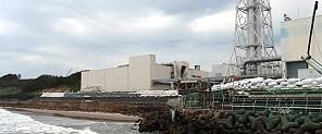 Fukuşima'dan sığır etine yasak