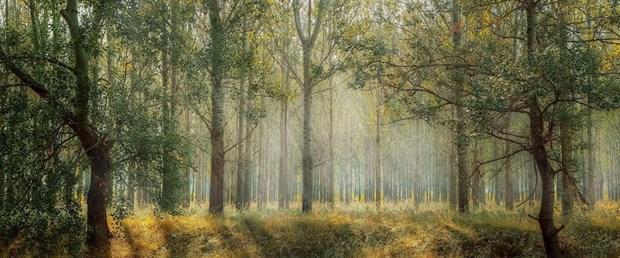 ağaç orman.jpg