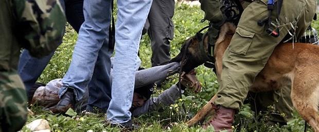 israil-köpek-saldırı-filistin060215