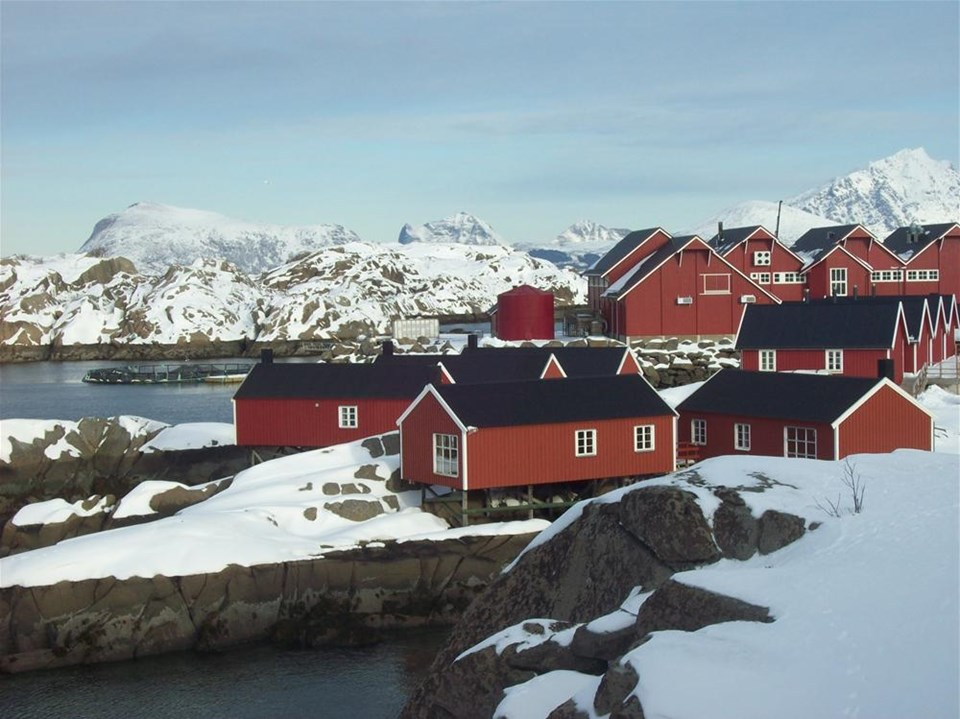 İsveç'te buz hasadı