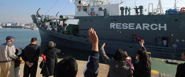 japonya balina av310317.jpg
