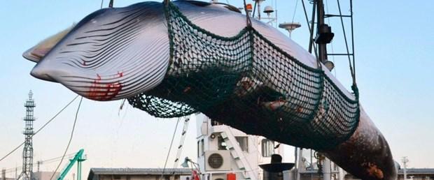 balina av japonya261218.jpg