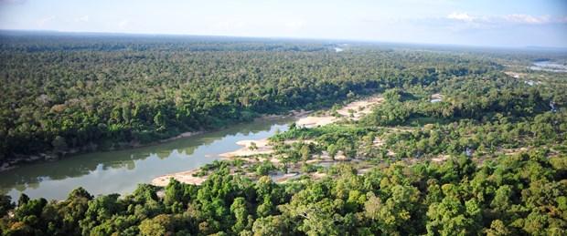 kamboçya orman.jpg