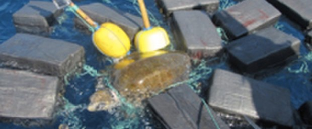 cocaine-turtle.png