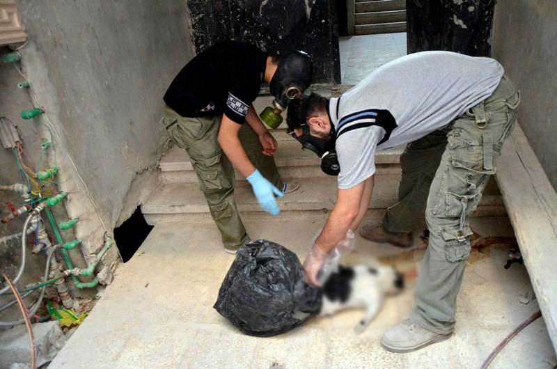 'Kimyasal silah yüzlerce hayvanı öldürdü'