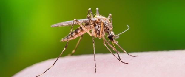 sivrisinek.jpg