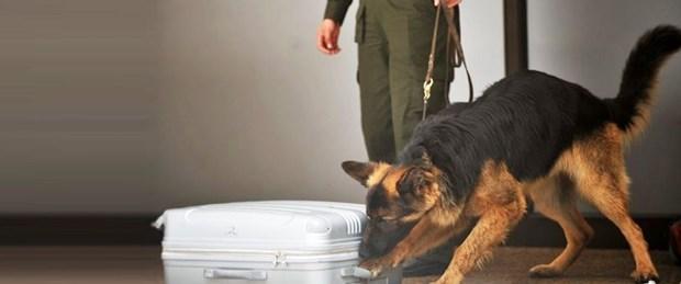 Kolombiya'da uyuşturucuyu bulan narkotik köpeğin başına 70 bin dolar ödül koydular