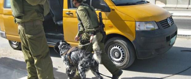 Köpek eğitiminde Filistinli kullanıyorlar