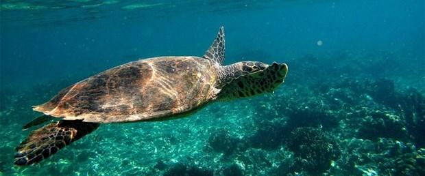 180116-deniz-kaplumbağası.jpg