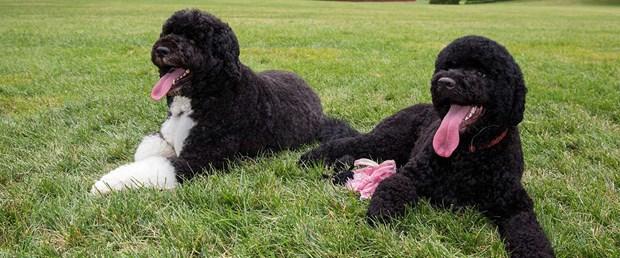 obama köpekleri.jpg