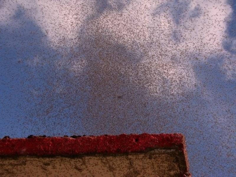 Sivrisinekler kenti işgal etti
