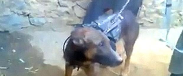 Taliban bu kez bir köpeği esir aldı