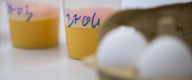 avrupa zehirli yumurta080817.jpg