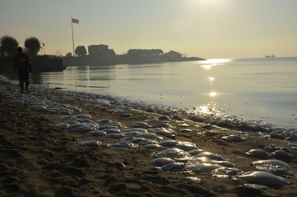 İstanbul'da korkutan dev denizanaları: Her biri en az bir kilo ağırlığında - 17